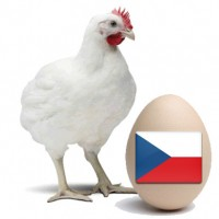 Инкубационное яйцо бройлера кобб, Ред бро, Накед нек