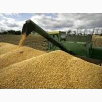 Семена Яровой пшеницы (ОС, ЭС, РС1): Дарья, Злата, Агата