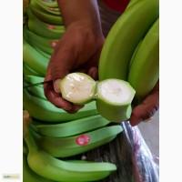 Оптовые поставки бананов из Мексики (Cavendish premium) в Санкт-Петербург