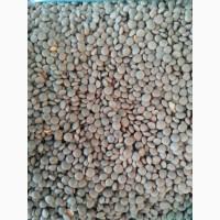 Семена чечевицы Донская краснозерная