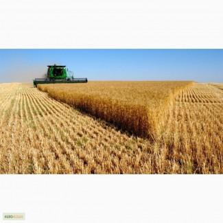 Продам пшеницу 3-4 класс по России и на Экспорт