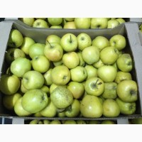Яблоки оптом. Голден 65+ Совхоз Плодовое
