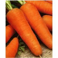 Морковь красная высшей сорт