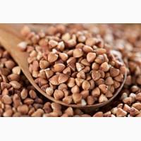 ООО НПП «Зарайские семена» продает семена гречихи оптом