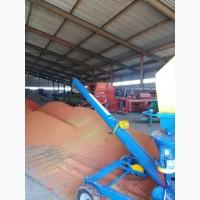 Протравливание и предпосевная обработка семян протравливателем ПС-20