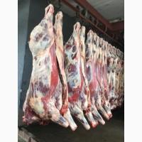 Говядина (быки в четвертинах)