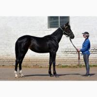 Продаю лошадей спортивных