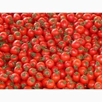 Продам томат (красный) урожай 2021года