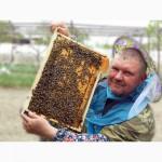 Привезу Пчелопакеты 3+1 Пчёлы породы Карника