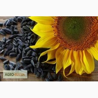 Гибриды семена подсолнечника Лимагрейн (Limagrain)