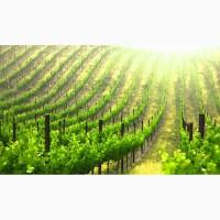 Опоры из черных и оцинкованных металлов для садов и виноградников