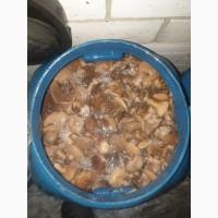 Предлагаем грибы маслята солено-отварные, бочковые. Сбор сентябрь 2019 года