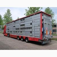 Перевозка Скота Коров Нетелей Быков Телят Лошадь Свиней Овец Бараны Коз Олень Лань Норка