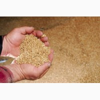 Пшеница Твердая на FOB Астрахань