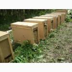 Пчелопакеты матки карпатка карника Санкт-Петербург
