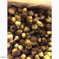 Продам грибы белые целые