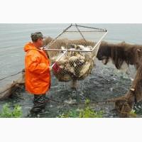 Ассоциация рыбоводных хозяйств Московской области