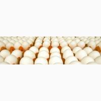 Инкубационное яйцо мясных кроссов