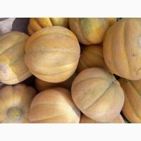 Продам арбузы и дыни. Сорта Каристан, Скиф, Продюссер, Эфиопка