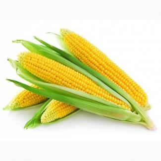Кукуруза оптом