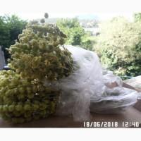 Горный крымский лимонник (железница крымская)