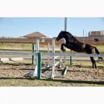 Продается лошадь, тёмно-гнедой мерин, порода УВП, УКРАИНА