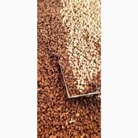 Продам семенной орех Чуфа