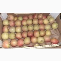 Яблоки Фуджи, сорт 2, калибр 55-65 от 10 тонн в картонном лотке 60х40, вес 13-15кг мытые