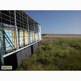Продаем пчелопакеты Крым
