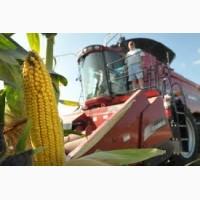 Семена Кукуруза (Рст); Росс, Краснодарский