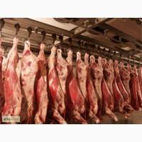 Купим просроченное мясо сырье