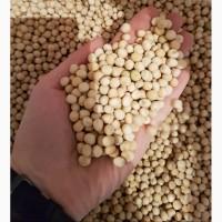 Горох семенной 300 тонн (Ростовская область)