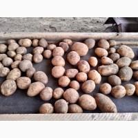 Продам картофель урожая 2018