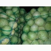 Капуста оптом белокочанная круглая от 2-4 кг с хозяйства Чувашкой рес-ке