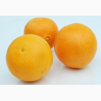 Продам апельсины сорт Valencia п-во Египет оптом от импортера
