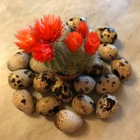 Инкубационные яйца перепелов - Феникс, Краснодар