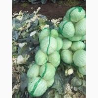 Продам капусту белокочанную оптом