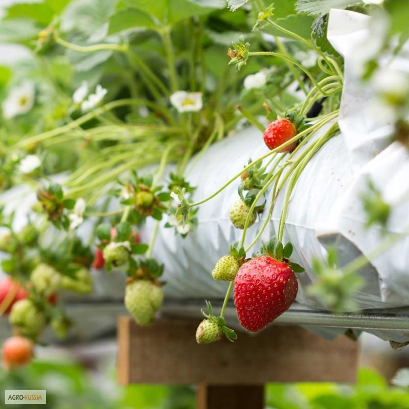 Маты для выращивания клубники 11
