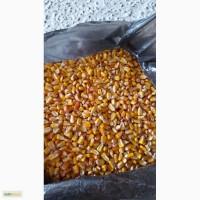 Кукуруза фуражная в наличии Новосибирск