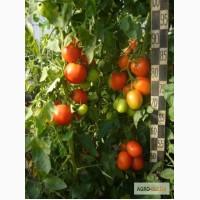 Семена овощных культур Сибниирс